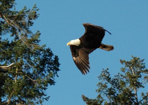 eagle_wallace_04