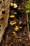 mushrooms_01