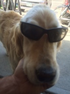 Cool dog Seren